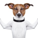 Make Money Online with a Pet Care Business